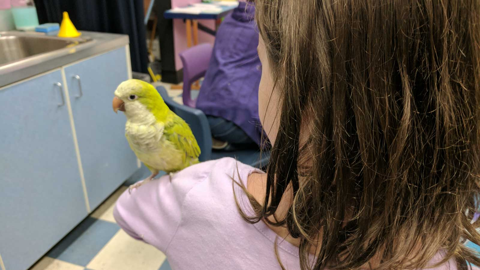 small bird on childs shoulder